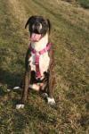 Bindehautentzündung bei Tieren - Hunde sind häufig betroffen.